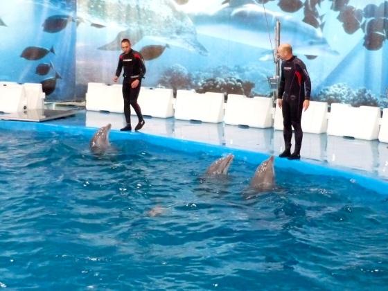 Kaum zu erkennen: Delfinbaby Nuik schwimmt während der Show hinter seinen Geschwistern. Links im Bild: Wärter Rubén Alcázar.